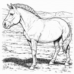 Picture of Horse Coloring Pages