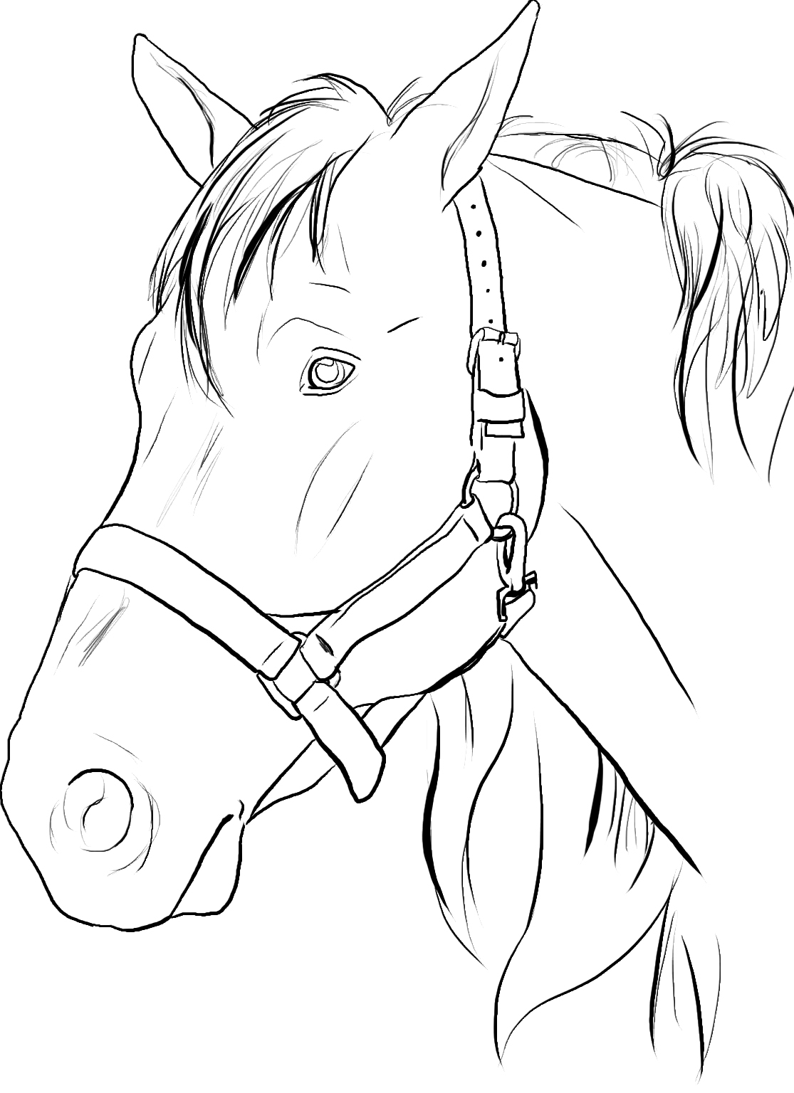 coloring pages horse head - photo#5