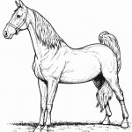 Horse Kitty Coloring Page Photo