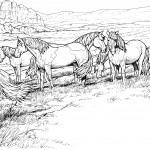 Pictures of Horses Coloring Pages