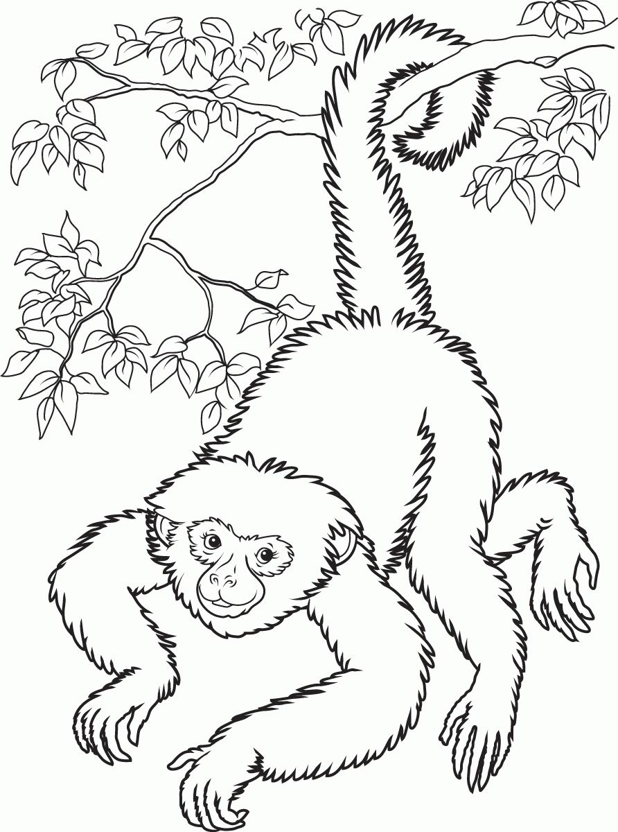 free printable monkey coloring pages for kids - Coloring Pages Monkeys Kids