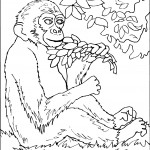 Monkey Coloring Pages Picture