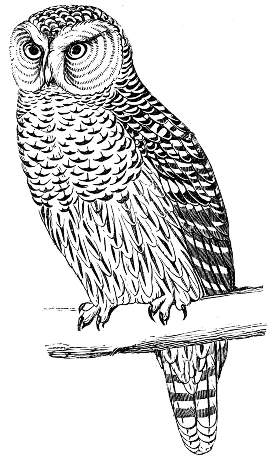 Free Printable Owl Coloring Pages For Kids | Animal Place