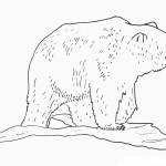 Polar Bear Coloring Page Image