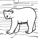 Polar Bear Coloring Page Images
