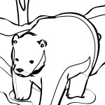 Polar Bear Coloring Page Photo