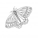Printable Butterfly Coloring Pages Picture