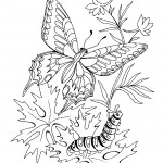 Image of Printable Butterfly Coloring Pages