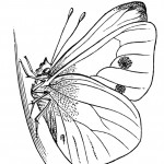 Photo of Printable Butterfly Coloring Pages
