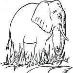 Printable Elephant Coloring Page Pictures