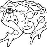 Printable Frog Coloring Page Photos