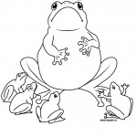 Printable Frog Coloring Pages Image