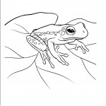 Printable Frog Coloring Pages Photo
