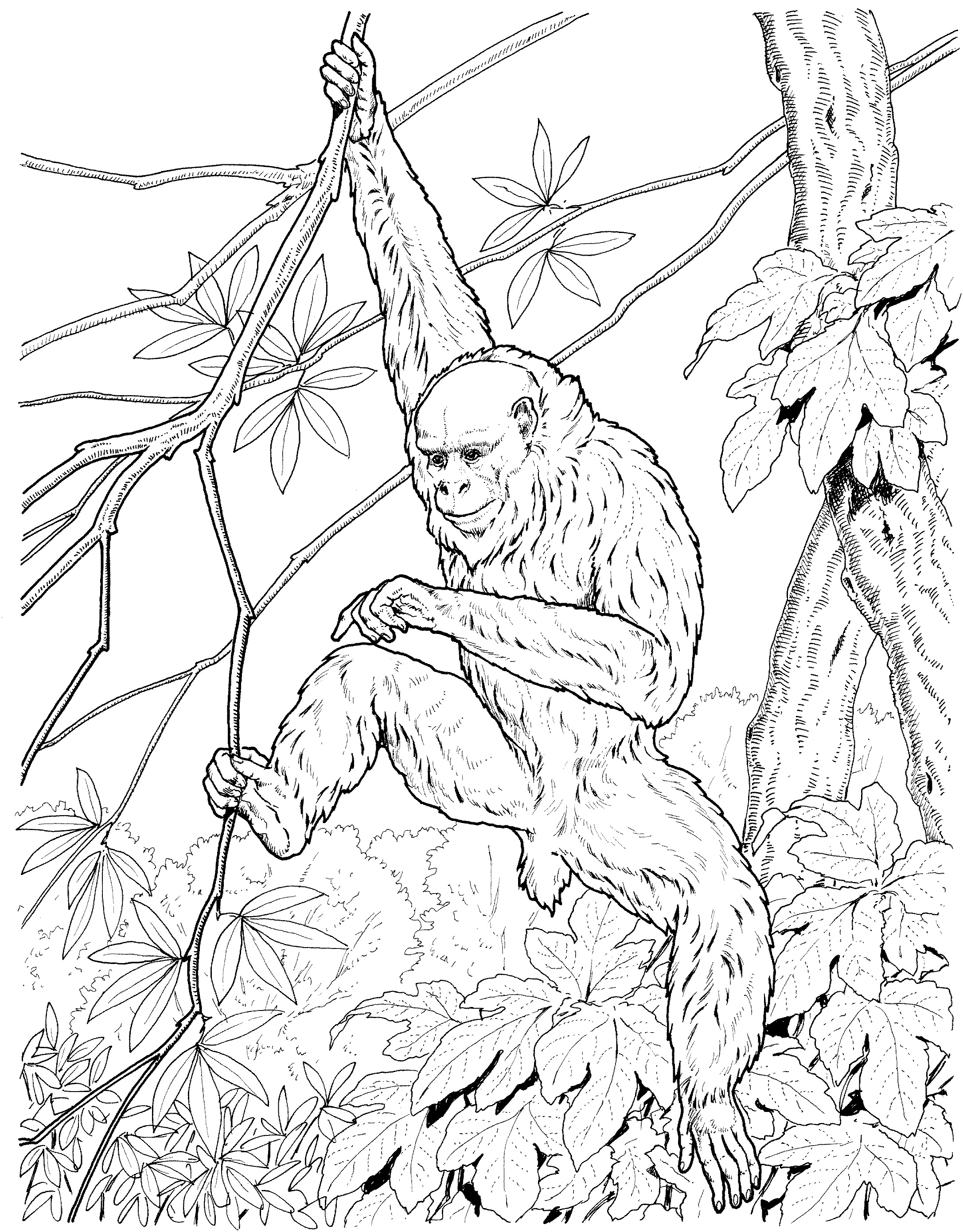 Free printable monkey coloring pages for kids animal place for Baboon coloring pages