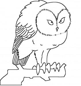 printable owl coloring page photo  animal place