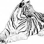 Printable Tiger Coloring Page Images