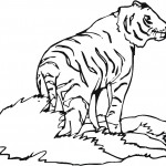 Printable Tiger Coloring Page Picture