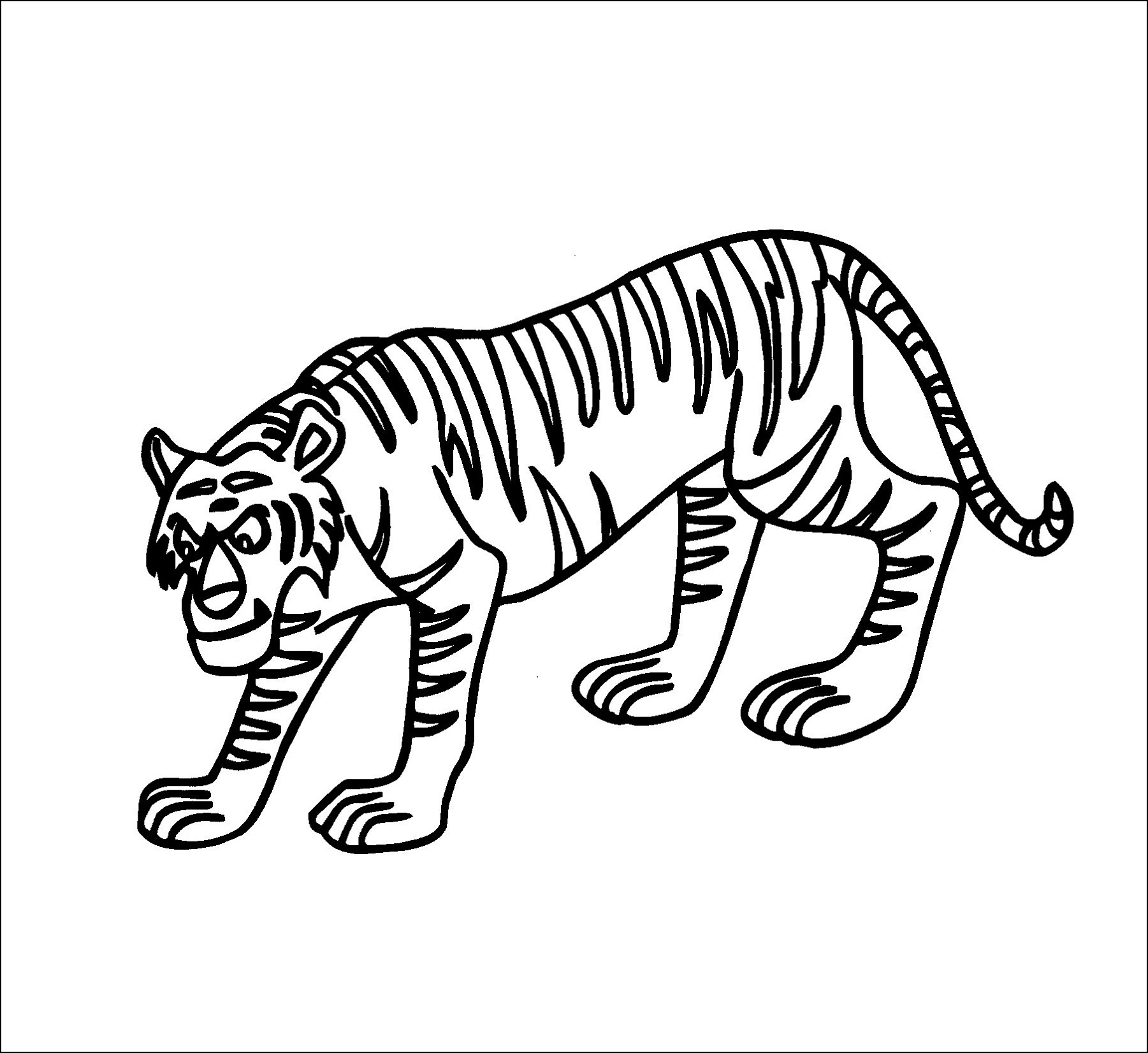 how to draw a small tiger