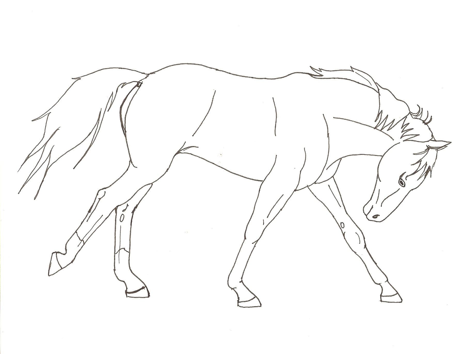 Free printable horse coloring pages for kids animal place for Coloring pages of horses running