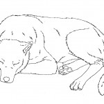 Sleeping Dog Coloring Page Picture