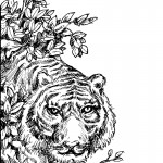 Tiger Coloring Page Image