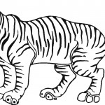 Tiger Coloring Page Photo