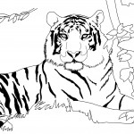 Tiger Coloring Page Picture