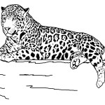 Tiger Coloring Page for Kids Image