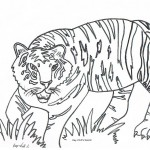 Tiger Coloring Page for Kids Photos