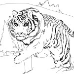 Tiger Coloring Pages Image