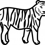 Tiger Coloring Pages Images