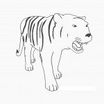 Tiger Coloring Pages Photo