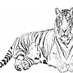 Tiger Coloring Pages Photos