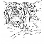 Tiger Coloring Pages for Kids Photos