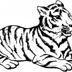 Tiger Coloring Pages for Kids Picture
