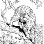 Tiger Coloring Pages for Kids Pictures