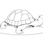 Turtle Coloring Page Image