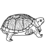 Turtle Coloring Page Images
