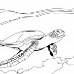 Turtle Coloring Page for Kids Image