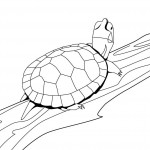 Turtle Coloring Page for Kids Photos