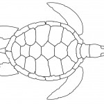 Turtle Coloring Page for Kids Pictures