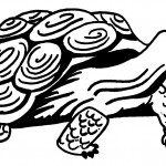Turtle Coloring Pages Image
