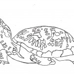 Turtle Coloring Pages Picture