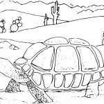 Turtle Coloring Pages for Kids Images