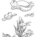 Turtle Coloring Pages for Kids Picture