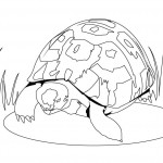 Turtle Coloring Pages for Kids Pictures