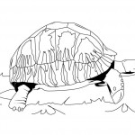Turtles Coloring Page