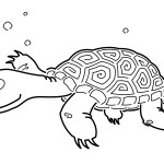 Turtles Coloring Page Images