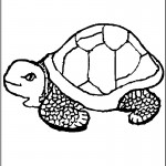Turtles Coloring Page Photo