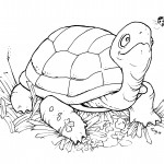 Turtles Coloring Page Picture